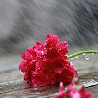 Văn mẫu lớp 6: Tả một ngày mùa đông mưa phùn
