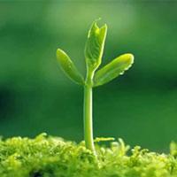 """Nghị luận về câu ngạn ngữ """"Học tập là hạt giống của kiến thức, kiến thức là hạt giống của hạnh phúc"""""""