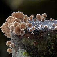 Trắc nghiệm Sinh học 10 - Chuyên đề: Giới khởi sinh, giới nguyên sinh và giới nấm