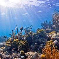 Giải bài tập SGK Tiếng Anh lớp 10 Unit 9: Undersea World