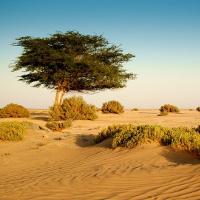 Giải bài tập SGK Tiếng Anh lớp 12 Unit 9: Deserts
