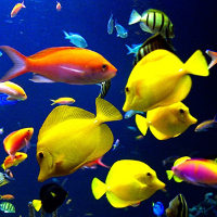 Từ vựng Tiếng Anh lớp 10 Unit 9: Undersea World
