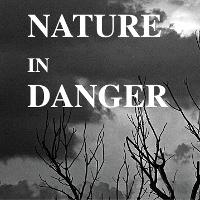 Giải bài tập SGK Tiếng Anh lớp 11 Unit 10: Nature in Danger