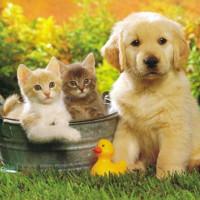 Giải bài tập SGK tiếng Anh lớp 3 Chương trình mới Unit 16 DO YOU HAVE ANY PETS?