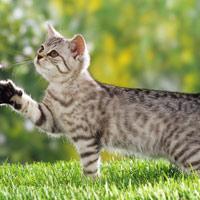 Bài tập làm văn lớp 4: Tả con vật