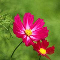 Tranh tô màu bông hoa dành cho bé học mẫu giáo