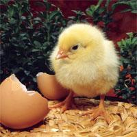 Cách điều chỉnh nhiệt độ máy ấp trứng