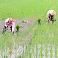 Văn mẫu lớp 5: Tả hình ảnh bác nông dân đang làm việc