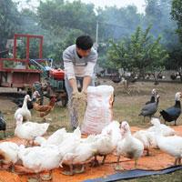 Giải bài tập SGK Công nghệ lớp 7 bài 46: Phòng, trị bệnh cho vật nuôi