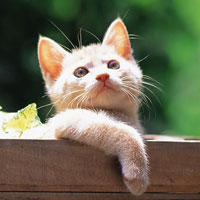 Truyện cổ tích cho bé: Mèo chuột kết nghĩa