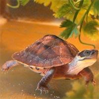 Truyện cổ tích cho bé: Con Rùa vàng