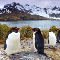 Truyện cổ tích cho bé: Sự tích chim cánh cụt
