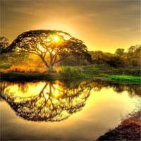 Tiểu sử cuộc đời và sự nghiệp sáng tác của nhà thơ Rabindranath Tagore