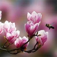 Giáo án mầm non đề tài: Hoa xuân đâu rồi nhỉ