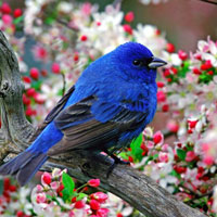 Luyện từ và câu lớp 2: Mở rộng vốn từ về loài chim