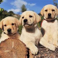 Trắc nghiệm Sinh học lớp 11 bài 32: Tập tính ở động vật (tiếp theo)