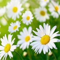 Lời bài hát Thì thầm mùa xuân
