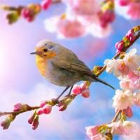 Lời bài hát Điệp khúc mùa xuân