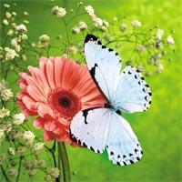 Lời bài hát Hoa cỏ mùa xuân