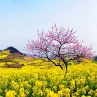 Lời bài hát Nhớ về một mùa xuân
