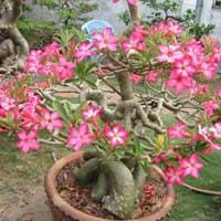 Giải bài tập SGK Khoa học 5 bài 52: Sự sinh sản của thực vật có hoa