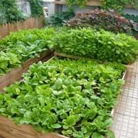 Lập dàn ý tả một vườn rau hoặc một luống rau lớp 4