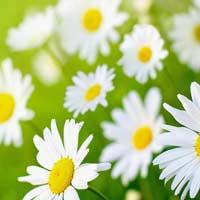 Tả một loài hoa mà em thích hay nhất
