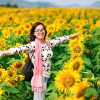 Văn mẫu lớp 5: Tả cây hoa hướng dương