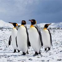 Tập bản đồ Địa lý lớp 7 bài 47: Châu Nam Cực - châu lục lạnh nhất thế giới