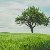 Luyện từ và câu lớp 2: Mở rộng vốn từ: Từ ngữ về cây cối