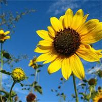 Trắc nghiệm Sinh học 6 bài41: Hạt kín - Đặc điểm của thực vật hạt kín