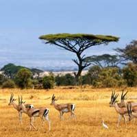 Giải bài tập SGK Địa lí 5 bài 24: Châu Phi (tiếp theo)