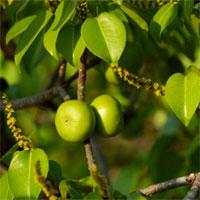 Trắc nghiệm Sinh học 6 bài 43: Khái niệm sơ lược về phân loại thực vật