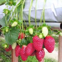 Trắc nghiệm Sinh học 6 bài45: Nguồn gốc cây trồng
