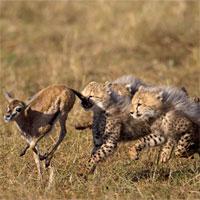 Trắc nghiệm Sinh học lớp 11 bài 31: Tập tính ở động vật