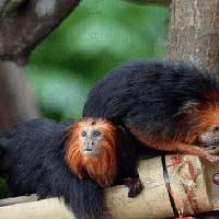 Tả con khỉ trong vườn thú Hay Chọn Lọc