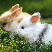 Tả con thỏ mà em biết