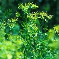 Giải bài tập SGK Khoa học 4 bài 61: Trao đổi chất ở thực vật
