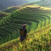 Tập bản đồ Địa lý lớp 8 bài36: Đặc điểm đất Việt Nam