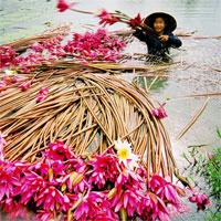 Tập bản đồ Địa lý lớp 8 bài31: Đặc điểm khí hậu Việt Nam