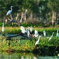 Tập bản đồ Địa lý lớp 8 bài 38: Bảo vệ tài nguyên sinh vật Việt Nam