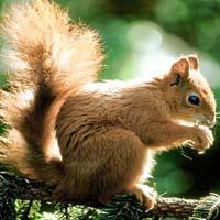 Giải bài tập SGK Khoa học 4 bài 64: Trao đổi chất ở động vật
