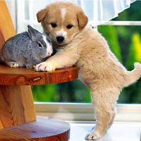 Văn mẫu lớp 7: Cảm xúc về một con vật nuôi