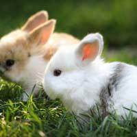 Tập làm văn lớp 4: Bài kiểm tra viết - Miêu tả con vật
