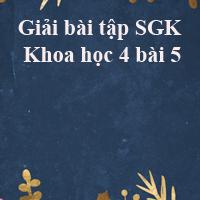 Giải bài tập SGK Khoa học 4 bài 5: Vai trò của chất đạm và chất béo