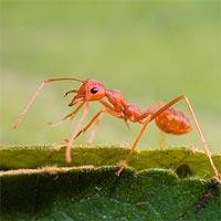 Tranh tô màu hình con kiến