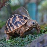 Tranh tô màu hình con rùa đáng yêu