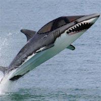 Tranh tô màu con cá mập cho bé