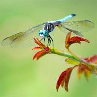 Tranh tô màu con chuồn chuồn nhiều màu sắc
