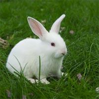 Tranh tô màu hình con thỏ siêu cute